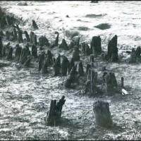 San Rocchino (Massarosa). Veduta dello scavo con resti di palificazioni di villaggio.