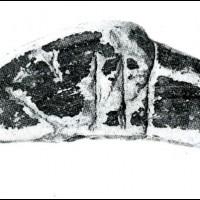 Frammento di ceramica a vernice nera con  iscrizione in etrusco. Museo Archeologico Versiliese \